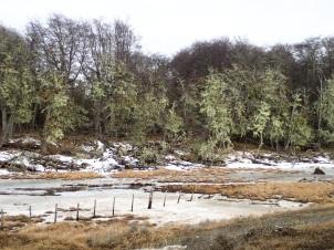 En quittant Tolhuin le paysage recouvert de marécages est encore boisé.