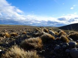 Me revoilà dans la steppe, la seule végétation qui pousse ici est faite d'herbes et de buissons.