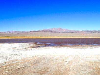 Laguna d'Antofagasta, bordée d'une habituelle nappe de sel