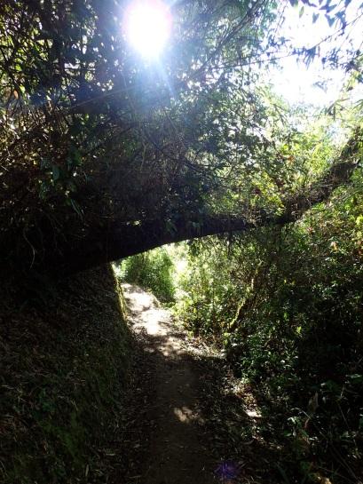 Le site de Choquequirao est assez étendu, et de petits sentiers comme celui-ci permettent de se balader à la découverte des différents vestiges