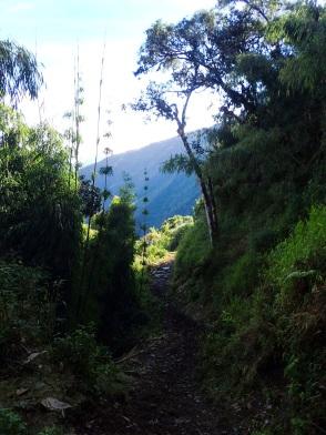 La forêt reprend ses droits en perdant en altitude, et le sentier inca se couvre de boue