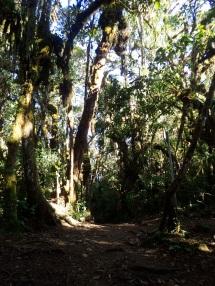 Chemin fait d'ombre et de lumière dans la forêt des nuages