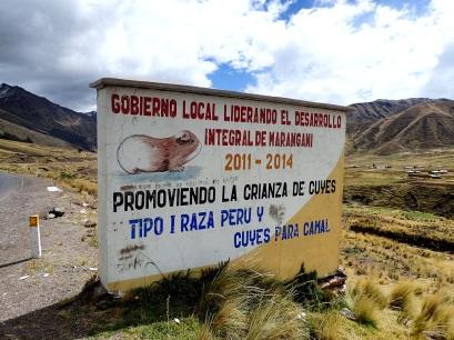 Le cochon d'Inde grillé, une délicieuse spécialité andine