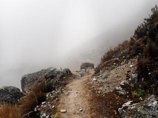 Dans le brouillard et le froid...